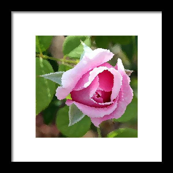 Rose Framed Print featuring the photograph Rosy Pink by Rodger Mansfield
