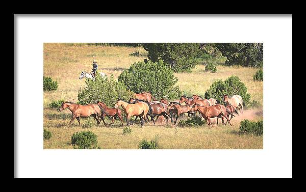 Michael Hamilton Framed Print featuring the photograph Round Em Up 002 by Michael Hamilton