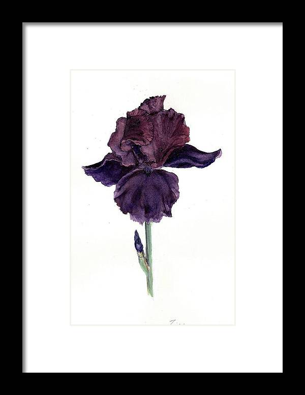 Botanical Framed Print featuring the painting Royal Ruffles by Susan Tilley