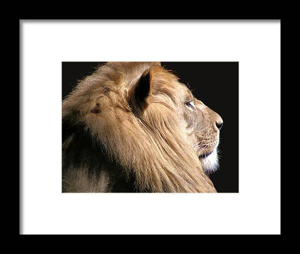 Lion Framed Print featuring the photograph Royalty by Scott Hovind