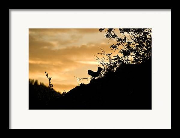Framed Print featuring the photograph Ruffle Grouse Dusk by JK Photography