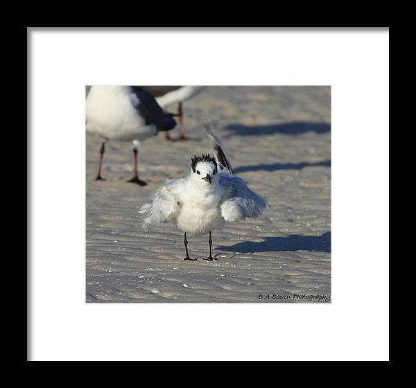 Gull Tern Framed Print featuring the photograph Ruffled Feathers by Barbara Bowen