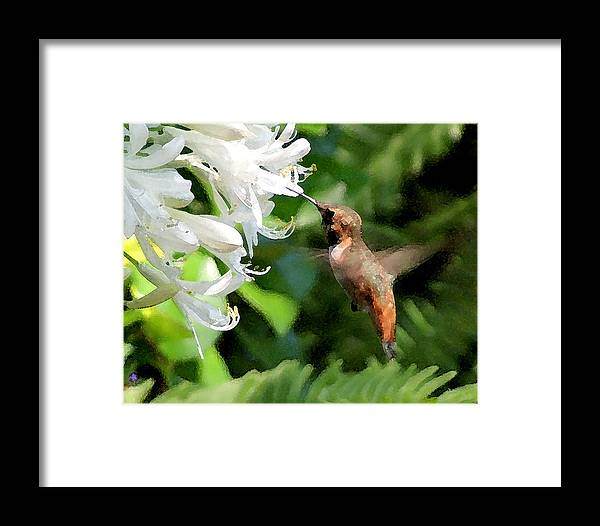 Wildlife Framed Print featuring the photograph Rufous Hummingbird by Ellen Lerner ODonnell