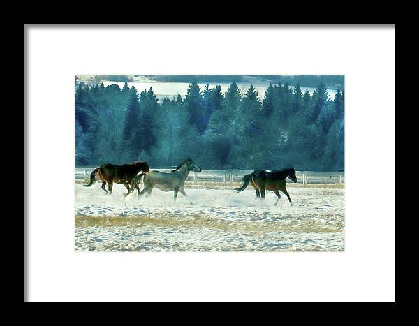 Horses Framed Print featuring the photograph Run With The Wind by Debbie Lind