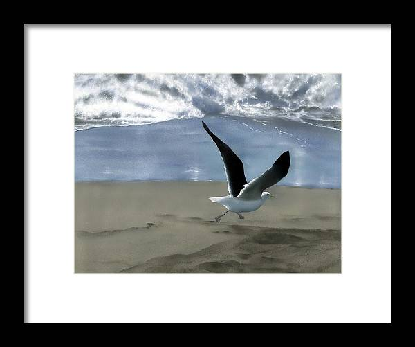 Gull Framed Print featuring the painting Running Gull by Charles Parks