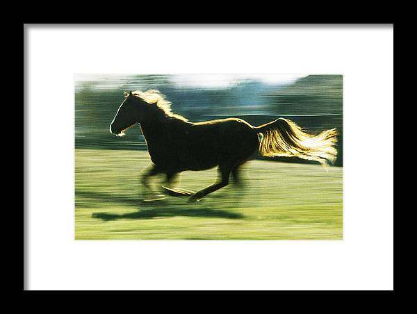 Horse Framed Print featuring the photograph Running Horse Backlit by Steve Somerville