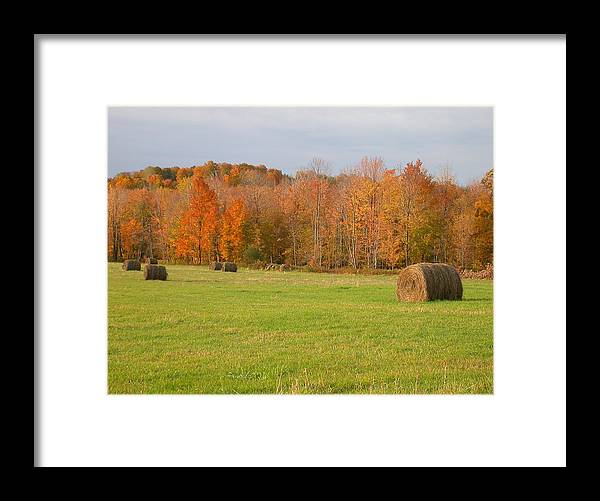 Hay Rolls Framed Print featuring the photograph Rural Scene by Raju Alagawadi