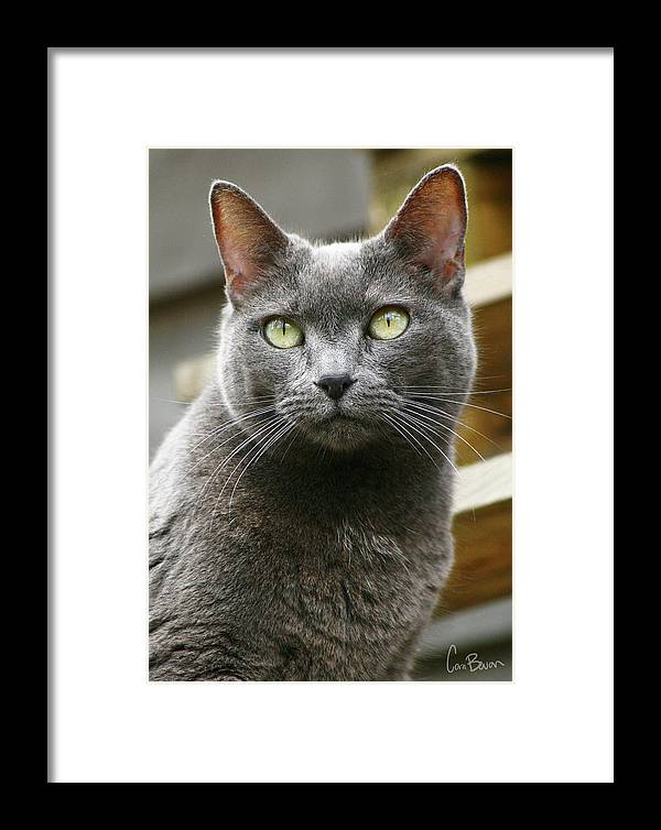 Photo Framed Print featuring the photograph Russian Blue by Cara Bevan