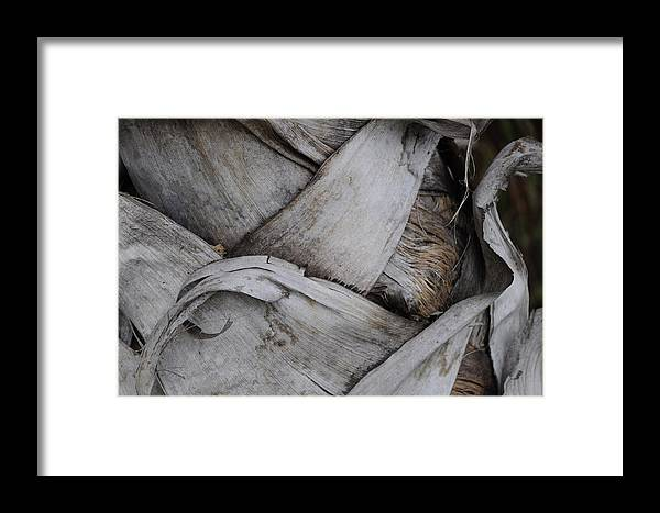 Framed Print featuring the photograph Sabel Palm 2 by Michael Raiman