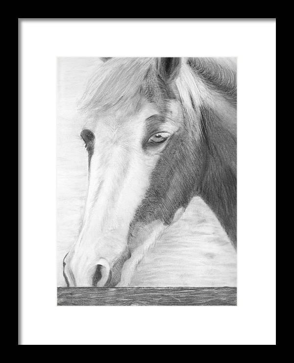 Horse Framed Print featuring the drawing Sabrina by Karen Stitt