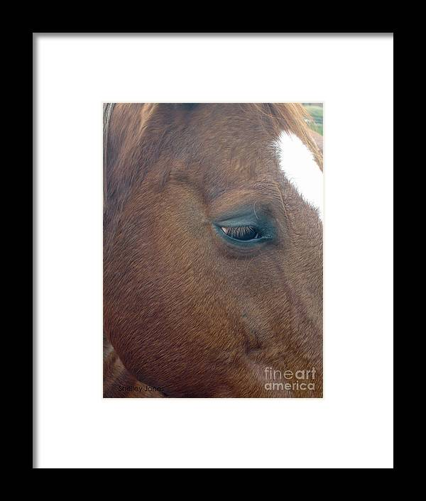 Horse Framed Print featuring the photograph Sad Eyed by Shelley Jones
