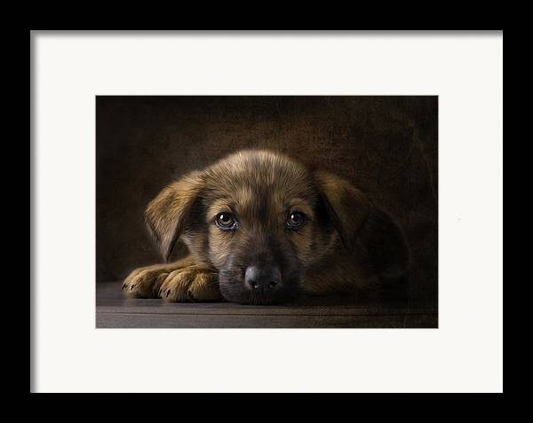 Puppy Framed Print featuring the digital art Sad Puppy by Bob Nolin