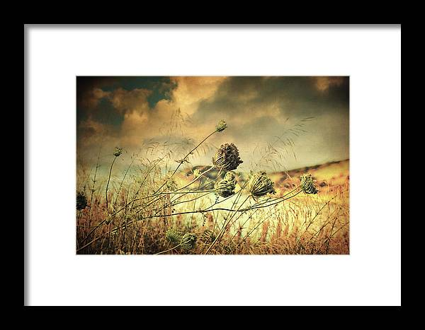 Fine Art Framed Print featuring the photograph Sad Song Of The Wind by Zapista