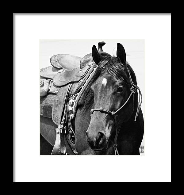 Horse Framed Print featuring the photograph Saddled To Go by Joanne Riske