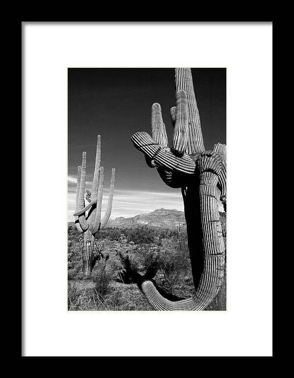 Arizona Desert Photography Framed Print featuring the photograph Saguaro by John Gee