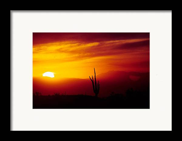 Arizona Framed Print featuring the photograph Saguaro Sunset by Randy Oberg