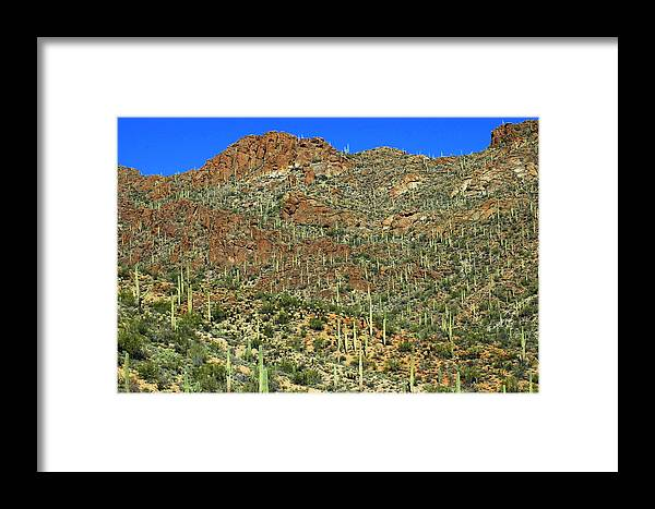 Tucson Framed Print featuring the photograph Saguaros by Teresa Stallings