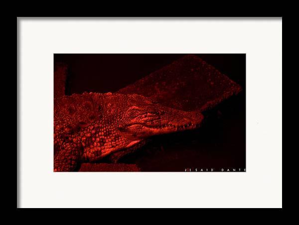 Alligator Framed Print featuring the photograph Said Dante by Jonathan Ellis Keys