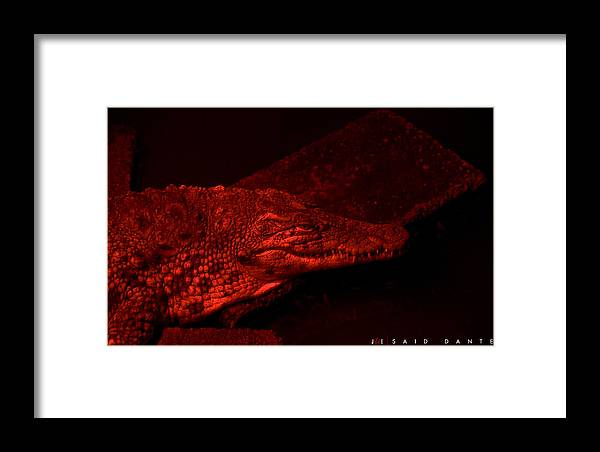 Alligator Framed Print featuring the photograph Said Dante by Jonathan Ellis Keys