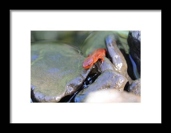 Salamandre Framed Print featuring the photograph Salamandre by Julien Boutin