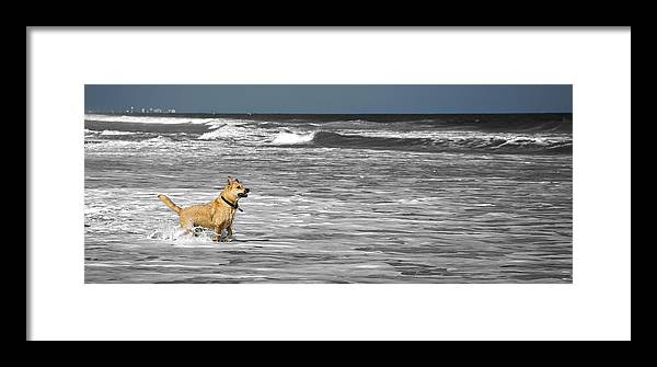 Beach Dog Framed Print featuring the photograph Salty Dog by Dan Smathers