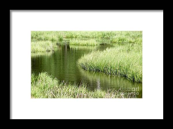 Salt Marsh Framed Print featuring the photograph Salty Way by Tim Lent