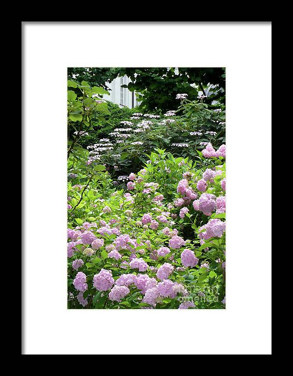 Austria Framed Print featuring the photograph Pink Hydrangeas In Mirabell Garden by Carol Groenen
