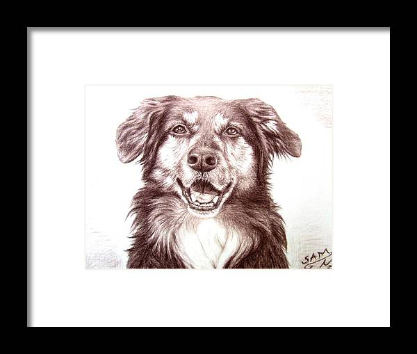 Dog Framed Print featuring the drawing Sam by Nicole Zeug