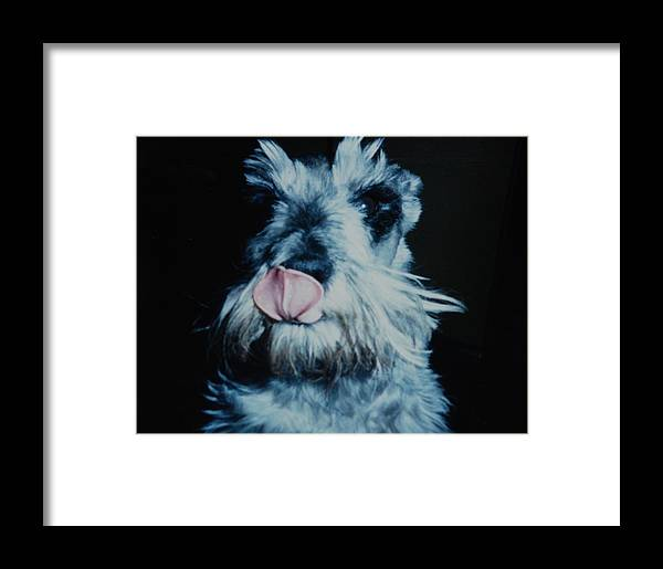 Dogs Framed Print featuring the photograph Sam The Fat Cow by Rob Hans