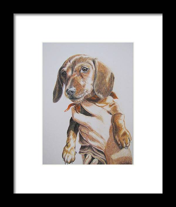 Puppy Framed Print featuring the drawing Sambo by Karen Ilari