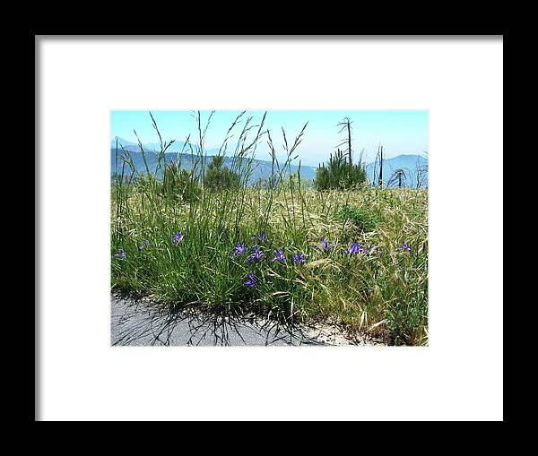 California Framed Print featuring the photograph San Bernardino Mountains - Southern California 5 by Larysa Kalynovska