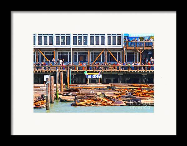 San Francisco Framed Print featuring the photograph San Francisco Pier 39 Sea Lions . 7d14272 by Wingsdomain Art and Photography