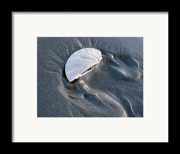 Sand Framed Print featuring the photograph Sanddollar by Ty Nichols