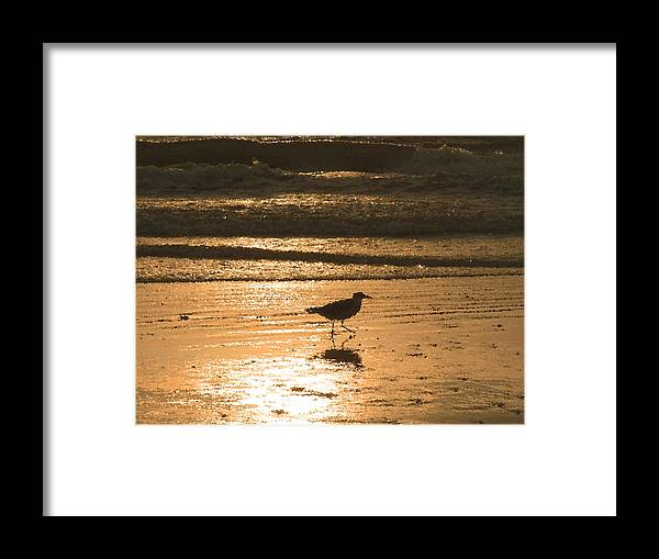 Nature Framed Print featuring the photograph Sandpiper by Peg Urban