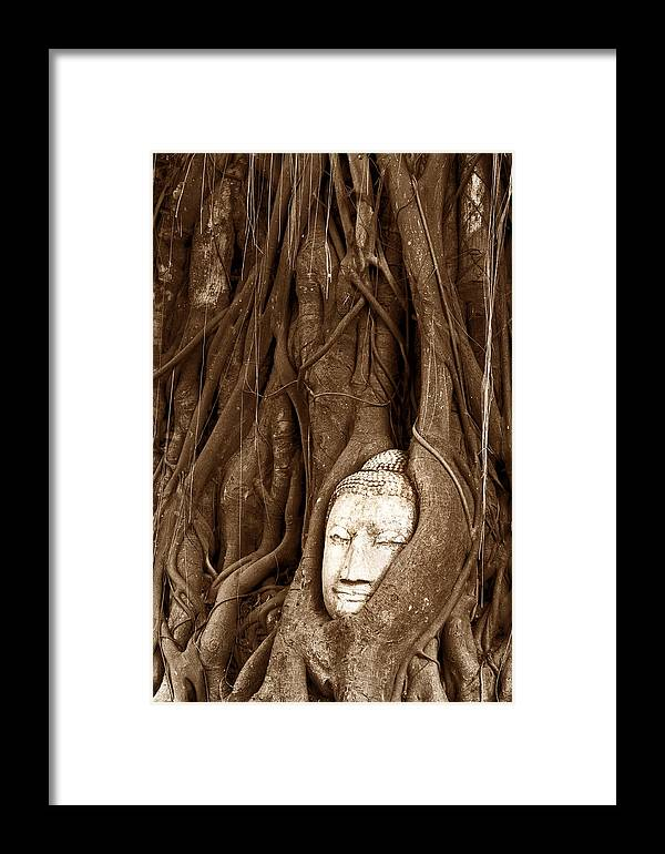Ancient Framed Print featuring the photograph Sandstone Buddha Head Overgrown By Banyan Tree Thailand by Tanawat Pontchour