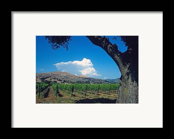 Landscape Framed Print featuring the photograph Santa Ynez Vineyard View by Kathy Yates