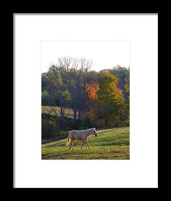 Rescue Framed Print featuring the photograph Sarafina by Jenny Gandert