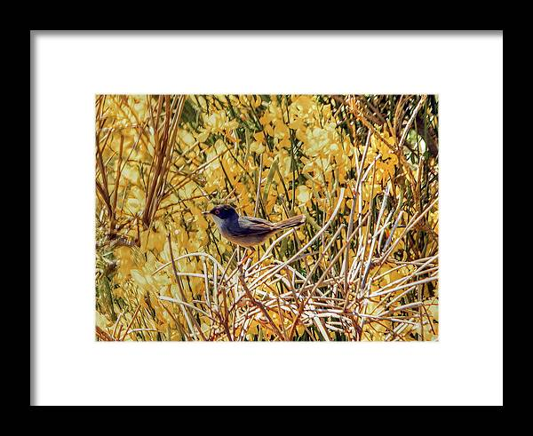 Sardinian Warbler Framed Print featuring the photograph Sardinian Warbler by Jeff Townsend