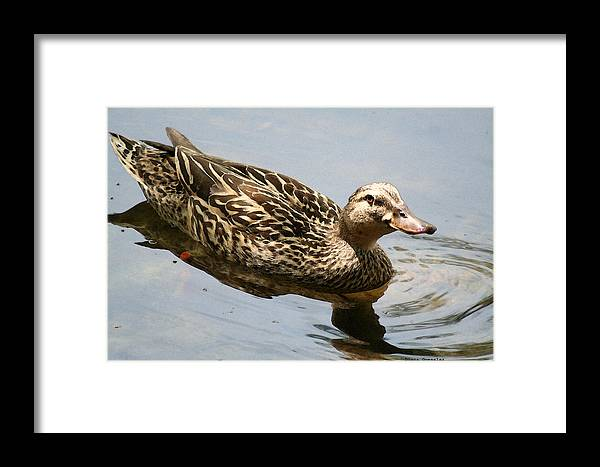 Duck Framed Print featuring the painting Saturday At The Pond by Diana Gonzalez