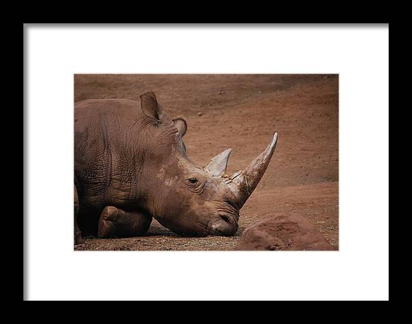 Rhino Framed Print featuring the photograph Savanna by Lakida Mcnair