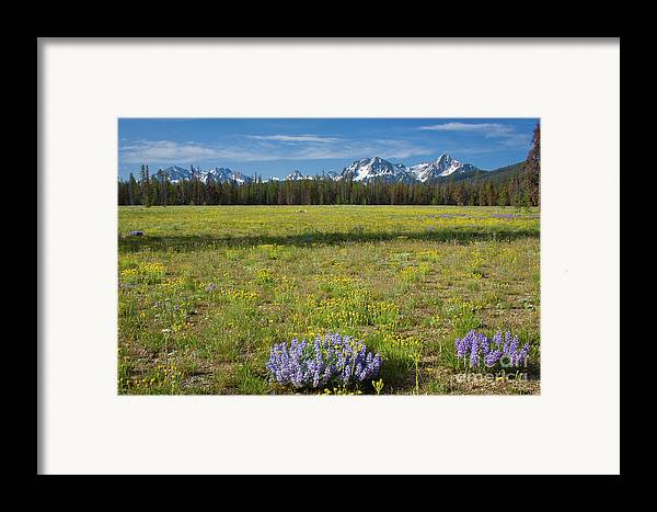 Wildflowers Framed Print featuring the photograph Sawtooths And Wildflowers by Idaho Scenic Images Linda Lantzy