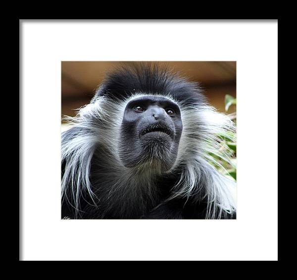 Monkey Framed Print featuring the photograph Say Cheese by S Cyr