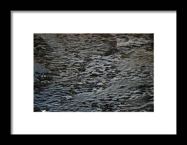 Scales Framed Print featuring the photograph Scaley Log by Joshua Sunday