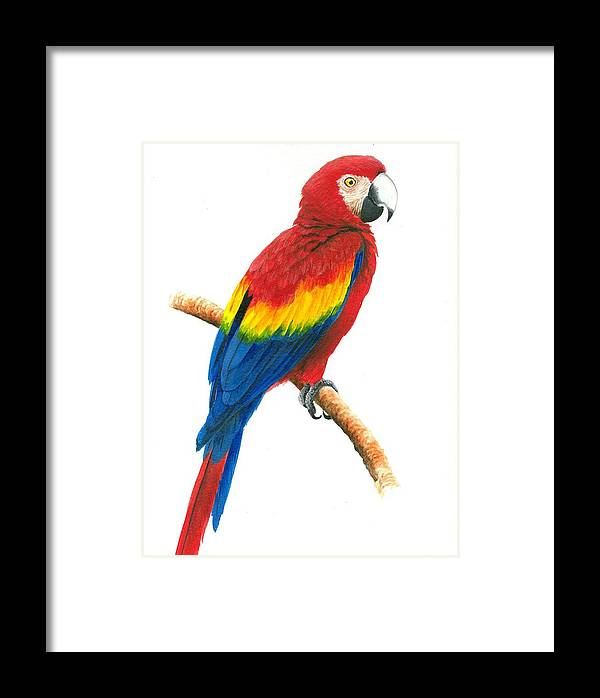 Chris Cox Framed Print featuring the painting Scarlet Macaw by Christopher Cox