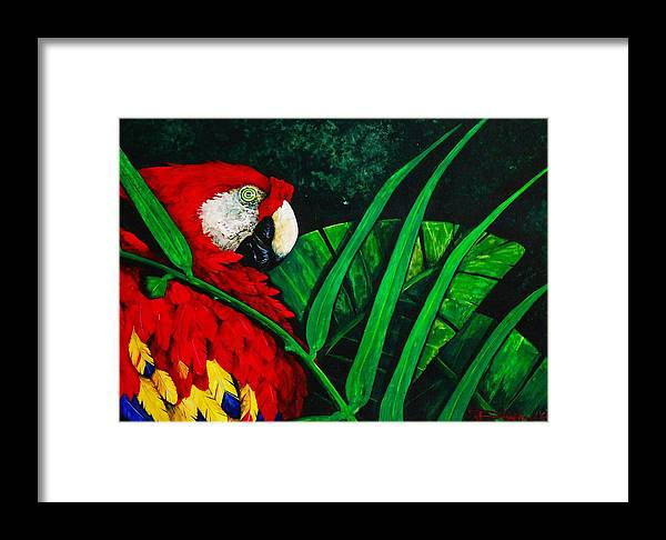 Birds Framed Print featuring the painting Scarlet Macaw Head Study by Dana Newman
