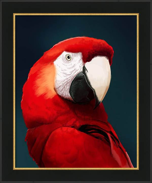 Scarlet Macaw by KC Gillies