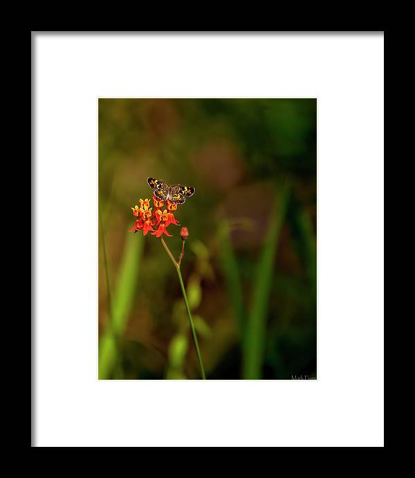 Florida Framed Print featuring the photograph Scarlet Milkweed And Butterfly by Mark Fuge
