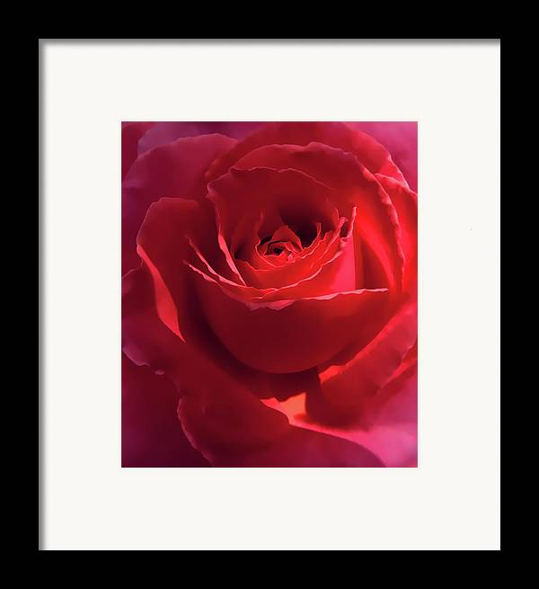 Rose Framed Print featuring the photograph Scarlet Rose Flower by Jennie Marie Schell