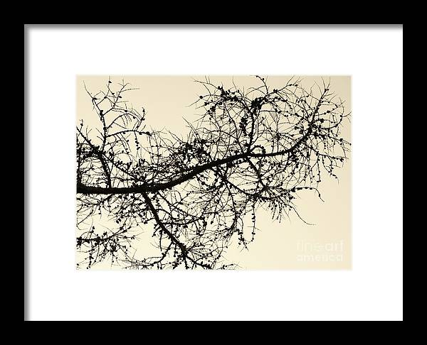 Framed Print featuring the photograph Scatter by Virginia Levasseur