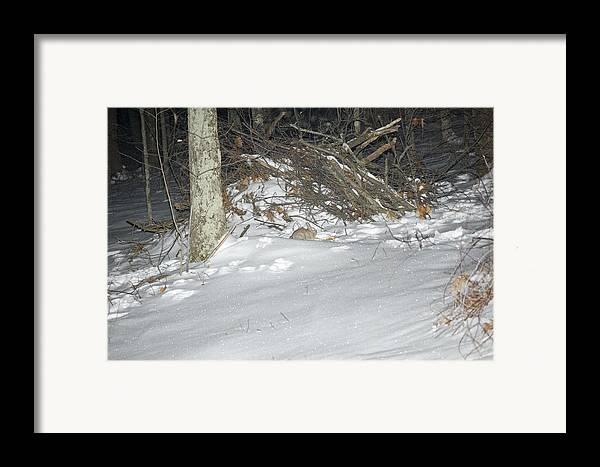 Winter Framed Print featuring the photograph Scavaging For Breakfast by Richard Botts